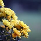 yellow chrysantemum by moniqe
