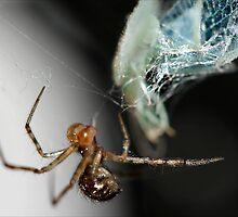 The spider and the fly by micklyn