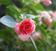 Impatient flower by Goggo