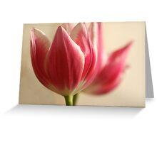 Pink Tulip Greeting Card