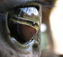 The Eye has it by Overlander4WD