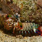Mantis Shrimp by Erik Schlogl