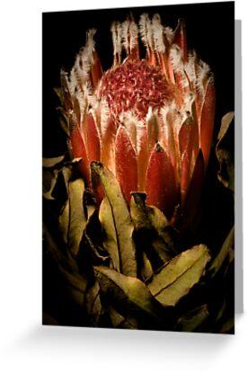 Floral decay 2 by Alex Shiels