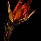 Floral Decay 4 by Alex Shiels