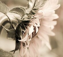 Flower Parade by Caroline Gorka