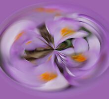 Crocus Sphere by Paul Revans