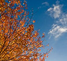 the brilliance of fall colours by pmacimagery