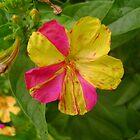 Flower by cetstreasures