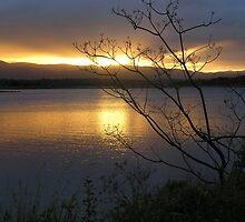 Lake Samsonvale Sunset by John Vriesekolk
