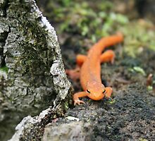 Mr. Newt by kristieb
