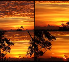 """Sunrise Collage"" by debsphotos"