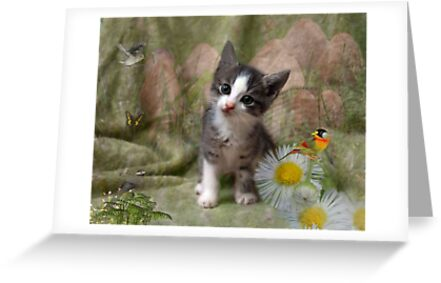 A Kittens Dream by Elaine  Manley