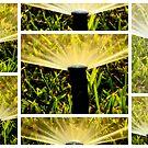 Meet : The Sprinklers, the next door neighbors..  by Isa Rodriguez