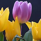 Tulips by Sandra Mangnall