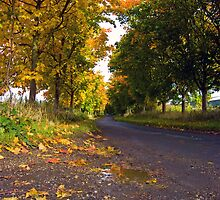 Autumn Road by Nigel Bangert