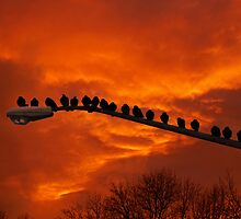 Enjoying The Sunset  by Lois  Bryan