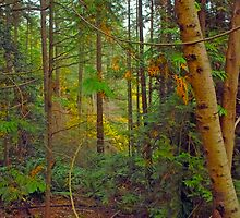 In Lighthouse Park, old-growth coastal rainforest by Priscilla Turner