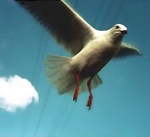 Seagull in Flight by Roz McQuillan