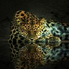 Leopard by Gene Praag