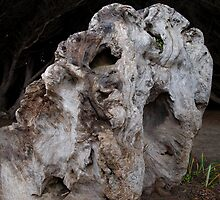 Whorly Burl by M L Rondez