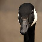 Canada Goose 2 by Franco De Luca Calce