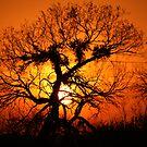 Blaze of Glory by Cheyenne