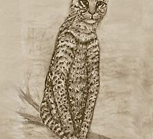 Ocelot Watching by Ave Maria [Cosgriff] Hurley
