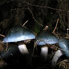 Blue Toadstools by Eunice Atkins