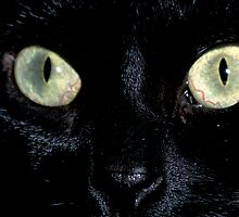 Ebony's Eyes by Bill Spengler