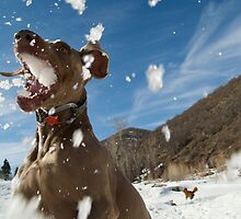 Fun in the Snow by Marc McDonald