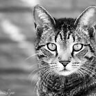 Kostya the Cat by dimalynn