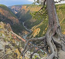 Grand Canyon of the Yellowstone, Wyoming by Tamas Bakos