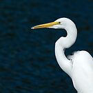 Great Egret by Bonnie T.  Barry