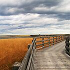 salt marsh by smw24