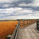 salt marsh by smw24