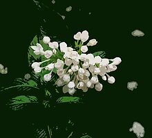 Flower cluster, white by Marilyn Baldey