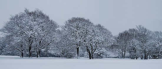 Winter wonderland by Gwyn Lockett