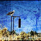 Osprey by Miriam Shilling
