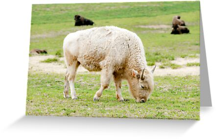 White Buffalo by Lisa G. Putman