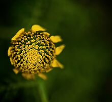 yellow on green by Victor Bezrukov
