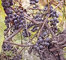 Fruit Of The Vine by Bob  Reeves