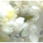 A Blurr of White Lilac by pmn-photography