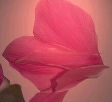 Pink on pink by Steve plowman