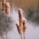 Rushes 2 by karenlynda