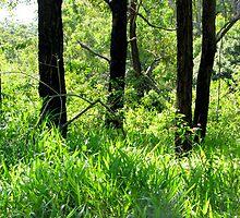 Fresh Grass by Brightwarrior