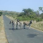 Zebra crossing by Gwyn Lockett