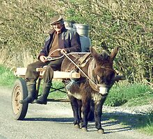 On the way to the dairy. Near Causeway, Co Kerry, Ireland. by Peter Stephenson