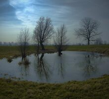 the pool by dutchlandscape