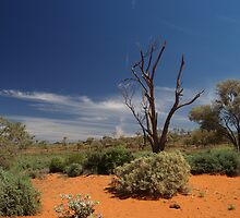 Outback Afternoon by Adrian Kent