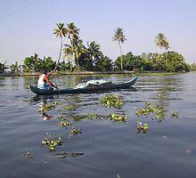 Man boating on the salt water lagoon in Alleppey in Kerala by ashishagarwal74